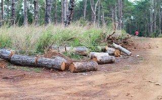An ninh - Hình sự - Đắk Nông: Chủ tịch xã nhận 350 triệu cho các đối tượng phá rừng