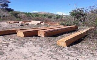 An ninh - Hình sự - Đắk Nông: Bắt nhóm đối tượng khai thác hơn 30m3 gỗ