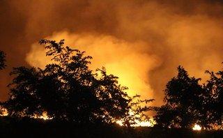 Tin nhanh - TP.HCM: Đang cháy lớn tại rừng tràm huyện Bình Chánh