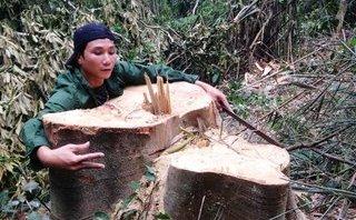 Điểm nóng - Thanh Hóa: Lâm tặc ngày đêm xẻ thịt rừng xanh Xuân Chinh