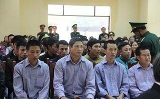 Hồ sơ điều tra - Nóng: Đang xét xử 21 bị cáo liên quan đến vụ phá rừng pơ mu ở Quảng Nam