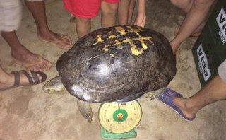 """Xã hội - Nghệ An: Người dân phóng sinh rùa """"khủng"""" gần 15kg vào trưa ngày rằm"""