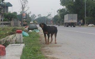 Xã hội - Nuôi chó phải đăng ký ở Nghệ An: Việc nên làm, nhưng sẽ khó khả thi