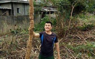 """Xã hội - Người dân kéo đến xem củ sắn """"khủng"""" dài gần 3m vừa đào được ở Nghệ An"""