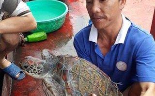 Tin nhanh - Rùa biển quý hiếm nặng hơn 8kg sa lưới ngư dân Nghệ An