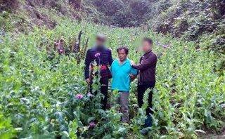 An ninh - Hình sự - Cao Bằng: Bắt giữ đối tượng trồng 1.296 cây thuốc phiện