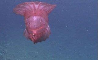 Cộng đồng mạng - Bất ngờ đoạn clip về quái vật gà không đầu dưới biển sâu