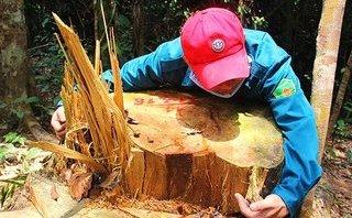 Môi trường - Quảng Nam: Địa bàn quá rộng nên vẫn còn tình trạng phá rừng!?