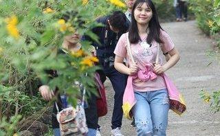 Văn hoá - Đẹp nao lòng rừng hoa dã quỳ dưới chân núi Tản