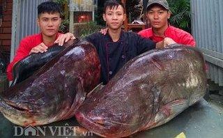 Tiêu dùng & Dư luận - Đôi cá leo dài 1,5m, nặng 107kg vừa xuất hiện tại Hà Nội có giá bao nhiêu?