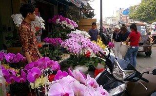 """Người Việt """"bạo tay"""" chi 18 triệu USD nhập hoa, cây cảnh chơi Tết"""