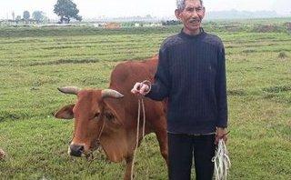Bạn đọc viết - Thu phí bò ăn cỏ: Xin lỗi, trả lại tiền... là huề cả làng?