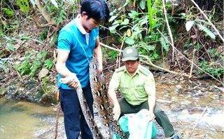 Xã hội - Khánh Hòa: Đầu bếp giao nộp trăn gấm quý giá cho khu bảo tồn
