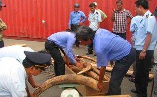 An ninh - Hình sự - Tạm đình chỉ điều tra 4 vụ phát hiện buôn lậu ngà voi