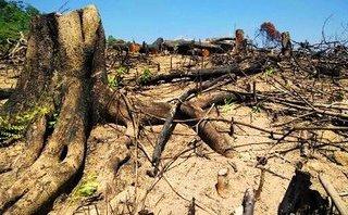 Xã hội - Phó Thủ tướng yêu cầu sớm xét xử công khai vụ phá rừng tại Bình Định
