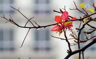 Tin nhanh - Thời tiết hôm nay: Sáng sớm Bắc bộ có mưa to, gió giật mạnh