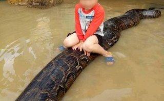 """Xã hội - Cậu bé 3 tuổi cưỡi trăn """"khủng"""" bơi trên nước được xác định ở Thanh Hóa"""
