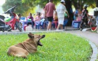 Dân sinh - Hà Nội: Chó vẫn thả rông, không rọ mõm khắp công viên, đường phố