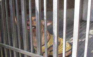 Chính trị - Xã hội - TP.HCM: Bắt chó thả rông, cán bộ bị nghi 'đạo chích'