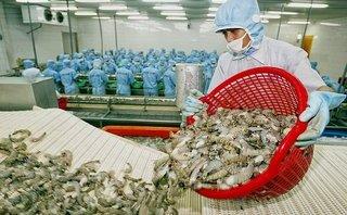 Tiêu dùng & Dư luận - Xuất khẩu tôm Việt vào thị trường Mỹ bị áp mức thuế cao kỷ lục