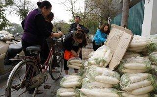 Tin nhanh - Su hào, củ cải nông dân bán 200 đồng, siêu thị bán 28.000 đồng/kg