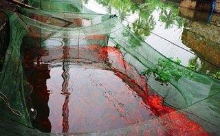 Xã hội - Thanh Hóa: Làng nuôi cá chép đỏ 'cháy' hàng dịp Tết ông Táo