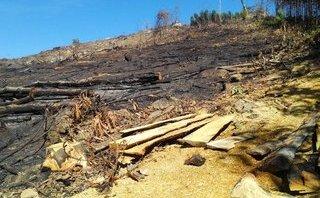 Chính trị - Xã hội - Tìm con đường lâm tặc đột nhập dễ dàng đốn gọn 43,7ha rừng