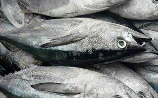 Một nữ công nhân bị sốc phản vệ suýt tử vong sau khi ăn cá ngừ