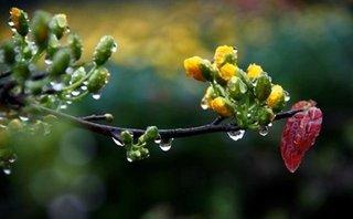 Thời tiết mùng 4 Tết: Bắc Bộ mưa nhỏ vài nơi