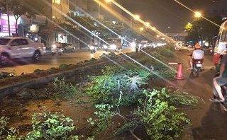 Chính trị - Xã hội - Hà Nội: Sự thật hàng loạt cây xanh trên dải phân cách bị nhổ bỏ