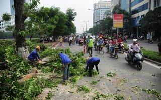 Chính trị - Xã hội - Hà Nội tiếp tục chặt, chuyển 130 cây xanh để làm đường sắt đô thị