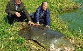 Xã hội - Xác nhận không còn 'cụ rùa' nào ở hồ Gươm
