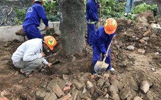 """Xã hội - Chủ tịch Hà Nội """"tiết lộ"""" công thức đánh, chuyển cây xanh không bị phản đối"""