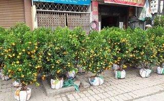 Xã hội - Hà Nội: Quất, đào chiều 30 Tết giá rẻ như cho, trả bằng nào cũng bán