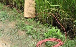 Pháp luật - Hà Nội: Bắt đối tượng giăng điện chống trộm khiến hàng xóm tử vong