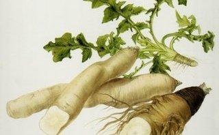Cần biết - Những chất xơ phòng chống táo bón hiệu quả cho trẻ nhỏ