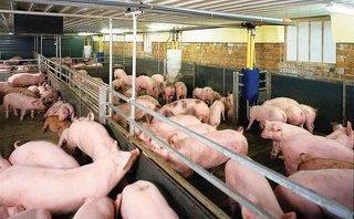 Kết nối- Chính sách - Đề xuất áp thuế bảo vệ môi trường trong chăn nuôi
