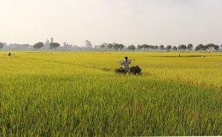 Kết nối- Chính sách - Nguyên tắc chuyển đổi đất lúa sang trồng cây lâu năm