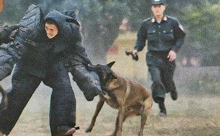 An ninh - Hình sự - Chuyện cảm động về những chú chó nghiệp vụ