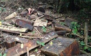 Điểm nóng - Vườn quốc gia Cúc Phương: 'Máu' rừng vẫn chảy