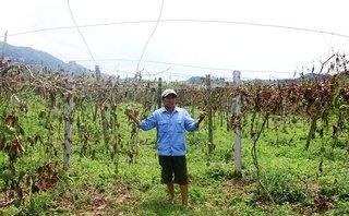 Pháp luật - Truy tìm thủ phạm chặt hạ vườn chanh leo trị giá gần 1 tỷ đồng