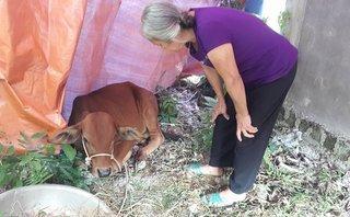Xã hội - Người nghèo Hà Tĩnh được hỗ trợ bò bị bệnh lở mồm long móng?