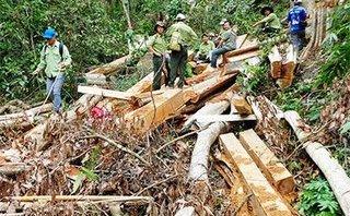 An ninh - Hình sự - Khởi tố, bắt tạm giam 2 trạm trưởng bảo vệ rừng ở Nghệ An