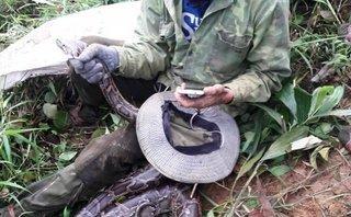 Tin nhanh - Hà Tĩnh: Dân bắt được trăn 'khủng' dài 2m, nặng 20kg?