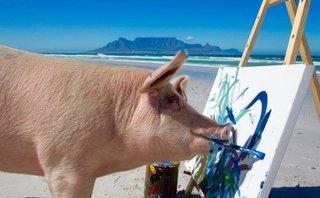 Tiêu điểm - Chân dung Pigcasso - thiên tài hội họa của giới động vật