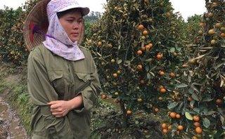 Xã hội - Thanh Hóa: Kẻ gian phun thuốc diệt cỏ, hủy hoại hơn 200 cây quất cảnh trong đêm