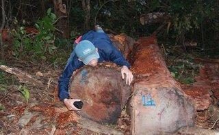 Điểm nóng - Đắk Lắk: Phát hiện vụ khai thác, tập kết trên 45m3 gỗ giữa rừng