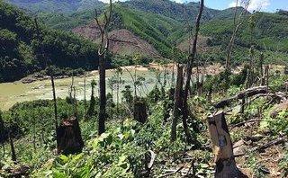 Cuộc sống xanh - Tiếng kêu cứu từ những cánh rừng phòng hộ