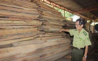 Điểm nóng - Bình Định: Truy tìm chủ nhân của lô gỗ hương lậu