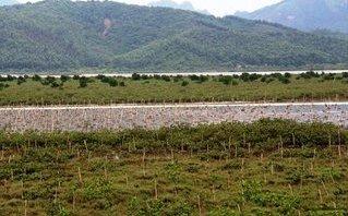 Cuộc sống xanh - Quảng Ninh: Bảo vệ rừng ven biển, ứng phó với biến đổi khí hậu